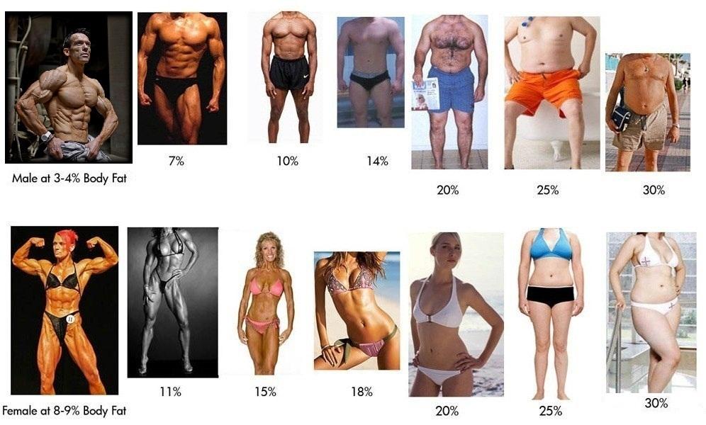 Жировая ткань и избыточный вес