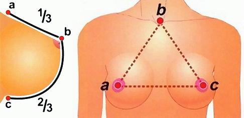 Идеальная форма женской груди